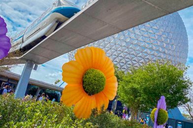 Going to Disney World in March? Here's What You Need To Know.