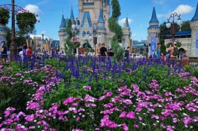 38 Things You Didn't Know Guest Services Could Do For You in Disney World