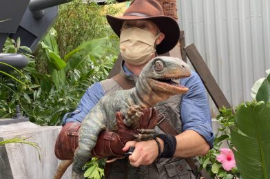 PHOTOS, VIDEO: Meet Blue and Baby Sierra at the New Jurassic World Raptor Encounter Experience in Universal's Islands of Adventure
