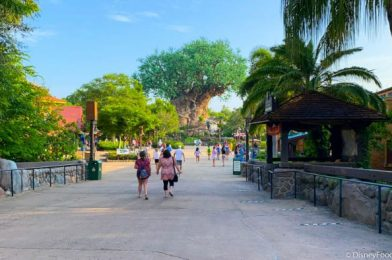 PHOTOS: Here's What Crowds Look Like in Animal Kingdom in Disney World on Reopening Day!