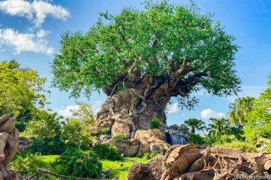 Here's What the Wait Times are Like on Reopening Day at Animal Kingdom!