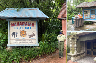 PHOTOS: Maharaja Jungle Trek at Disney's Animal Kingdom Walk-Through Reopens with Social Distancing Markers and No Animal Spotting Guides