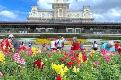Going to Disney World Soon? Then Take a Look at This Swan and Dolphin Annual Passholder DISCOUNT!