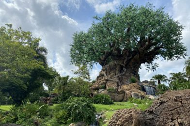 PHOTO REPORT: Disney's Animal Kingdom 7/10/20 (Annual Passholder Preview Day, First Look at New Social Distancing Standards, and Baby Flamingos)