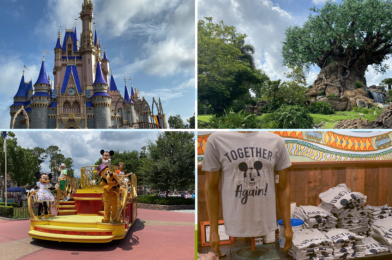 WDWNT Weekly Recap: The Magic Kingdom and Disney's Animal Kingdom Reopen After Historic COVID-19 Closure, and More!