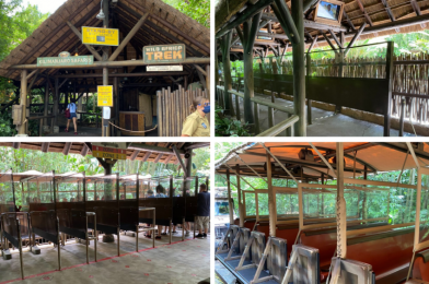 PHOTOS: Kilimanjaro Safaris Installs Social Distancing Markers and Plexiglass Barriers