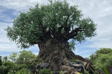 PHOTO REPORT: Disney's Animal Kingdom 7/29/20 (Low Wait Times, Cute Disney Animals, and More)
