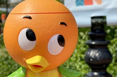 The Orange Bird Sipper Has Landed at an Unexpected Place in EPCOT!