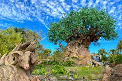Wait Times in Disney World Significantly DROPPED This Week!