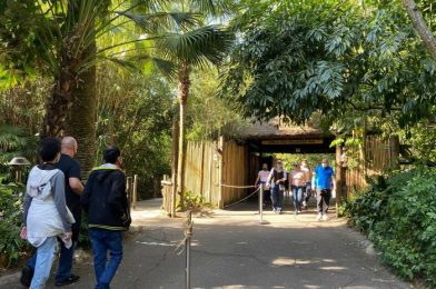 Gorilla Falls Exploration Trail at Animal Kingdom Under Partial Refurbishment