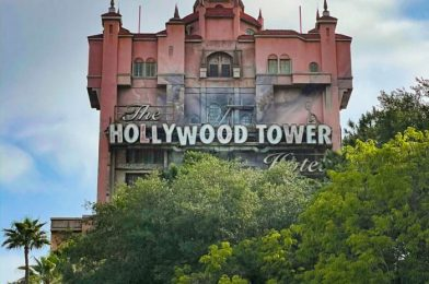 What's New at Disney's Hollywood Studios: A Confused Porg and 3 Reopenings