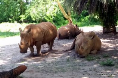 VIDEO: There's An ADORABLE New Addition at Disney's Animal Kingdom!