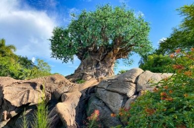 What's New at Animal Kingdom: Another Restaurant Reopens, a GIANT Construction Barge Disappears, and MORE!